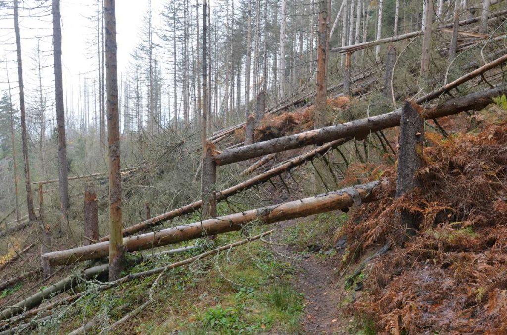 Umgefallene Bäume auf dem Reitsteig.
