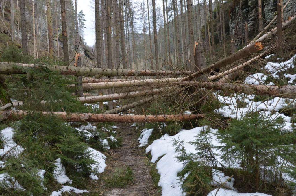 Umgefallene Bäume im unteren Teil der Richterschlüchte.