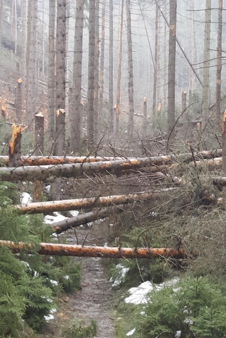Umgefallende Bäume auf dem markierten Wanderweg durch die Richterschlüchte.