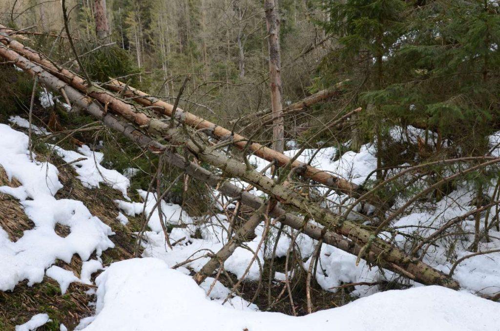 Umgefallende Bäume an den Zustiegen zu den Klettergipfeln.